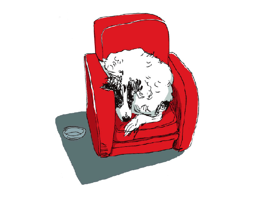 chien-nicknowego